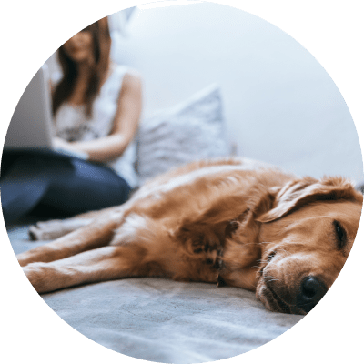 Dog sleeping on a bed with a woman on a laptop buying insurance